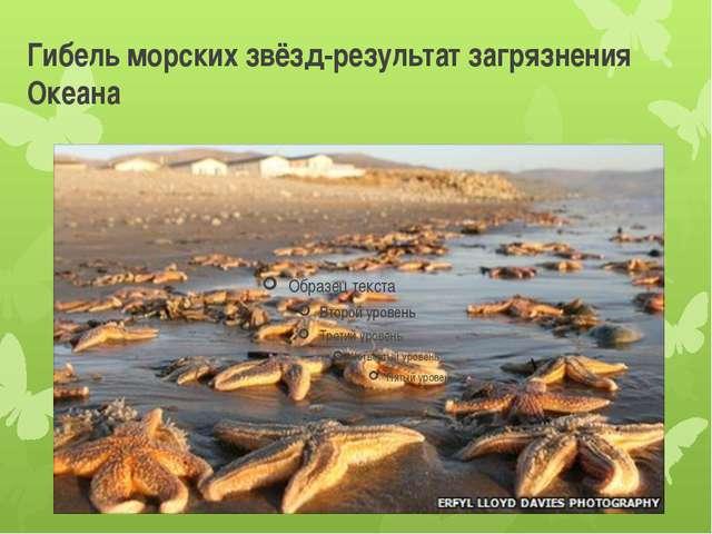 Гибель морских звёзд-результат загрязнения Океана