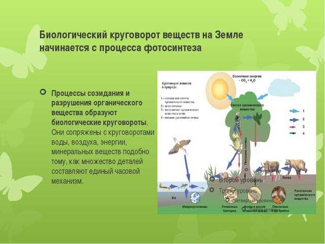 Биологический круговорот веществ на Земле начинается с процесса фотосинтеза П...