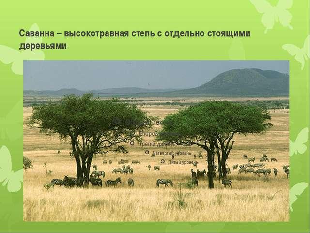 Саванна – высокотравная степь с отдельно стоящими деревьями