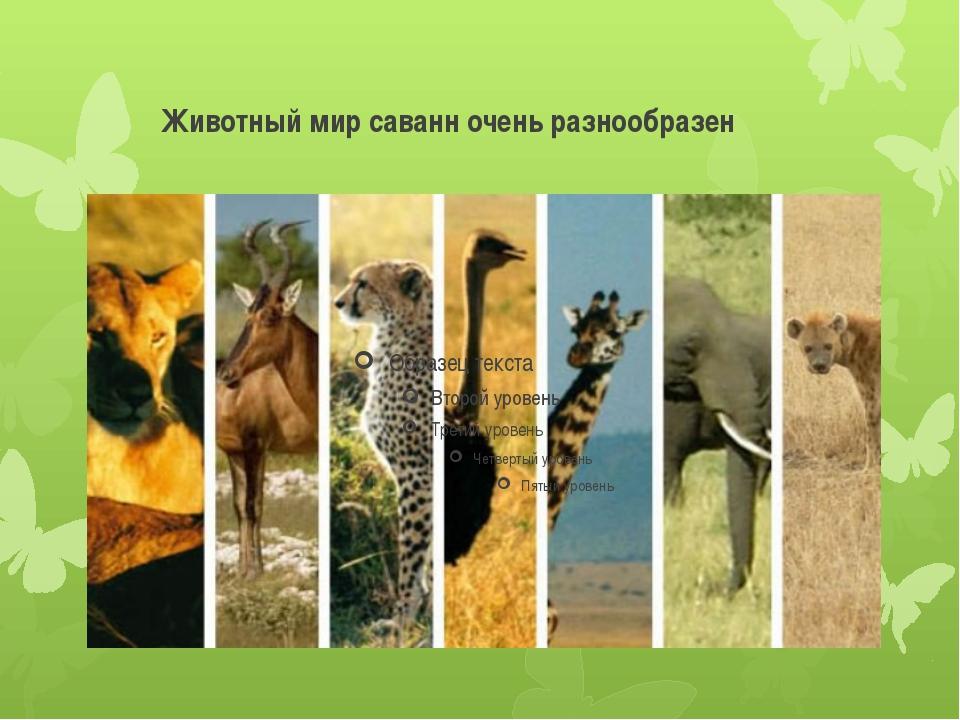 Животный мир саванн очень разнообразен