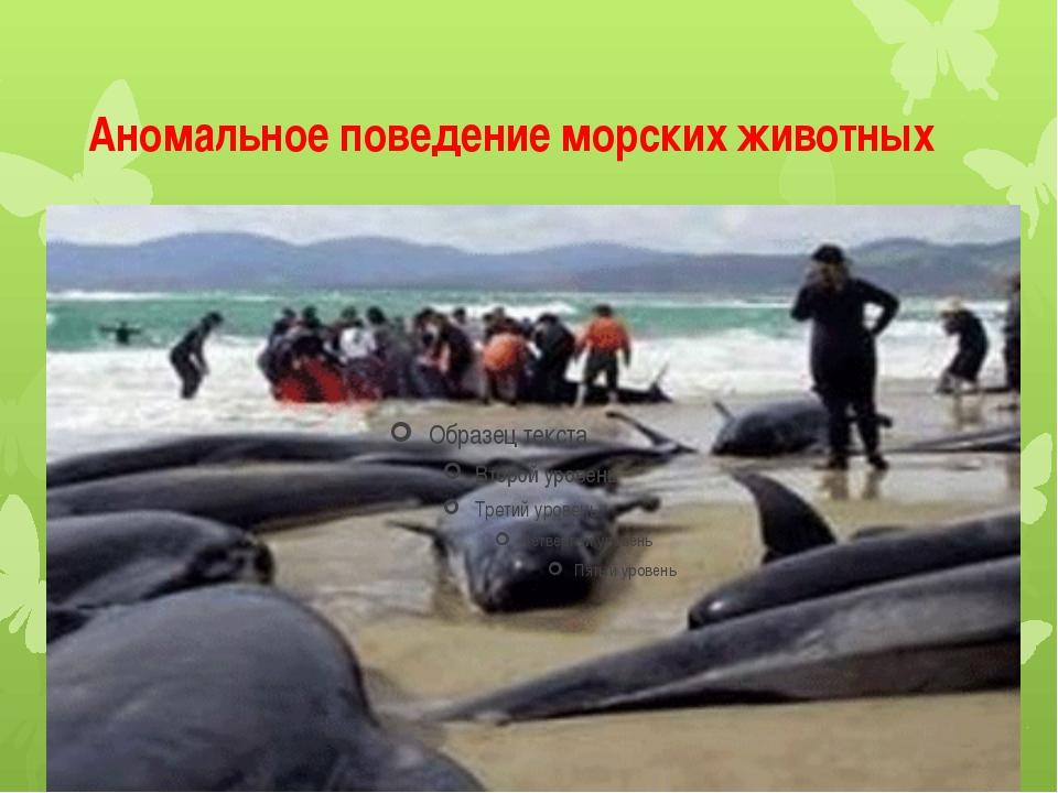 Аномальное поведение морских животных