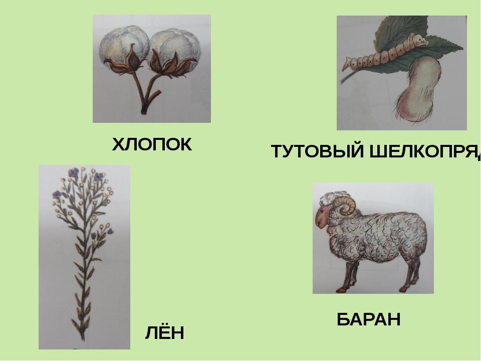 ТУТОВЫЙ ШЕЛКОПРЯД БАРАН ЛЁН ХЛОПОК