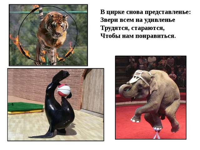 В цирке снова представленье: Звери всем на удивленье Трудятся, стараются, Что...