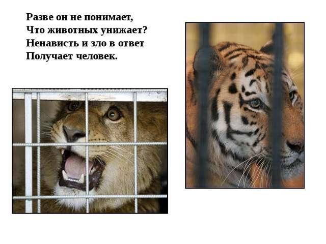 Разве он не понимает, Что животных унижает? Ненависть и зло в ответ Получает...