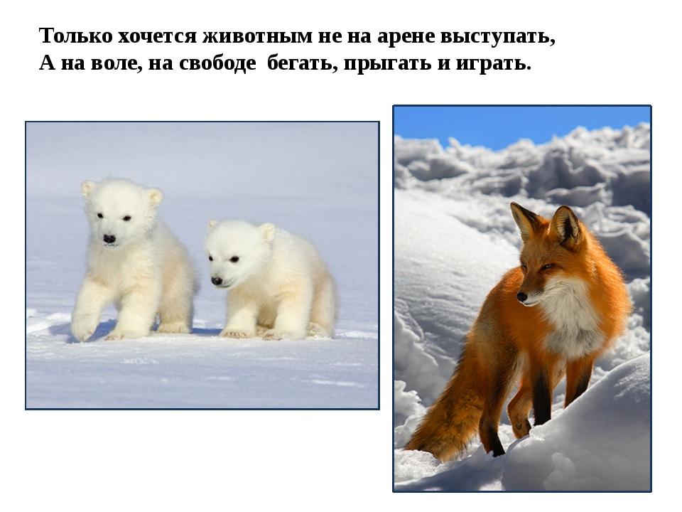 Только хочется животным не на арене выступать, А на воле, на свободе бегать,...