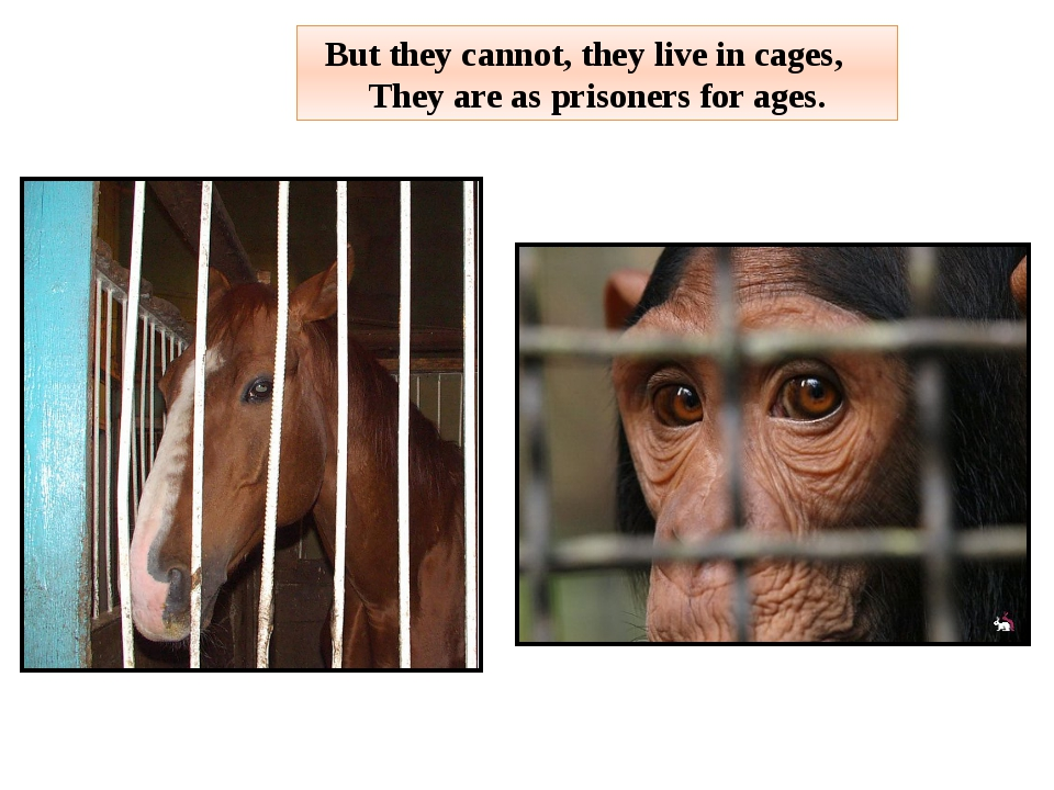 But they cannot, they live in cages, They are as prisoners for ages.