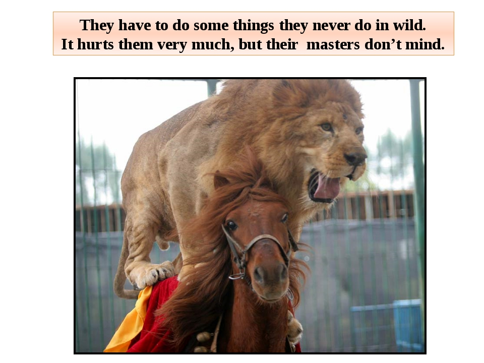 They have to do some things they never do in wild. It hurts them very much, b...