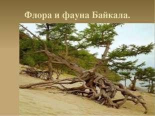 Флора и фауна Байкала.