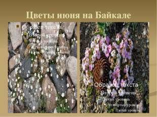 Цветы июня на Байкале