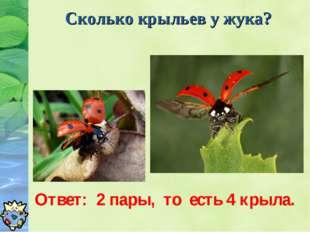 Сколько крыльев у жука? Ответ: 2 пары, то есть 4 крыла.
