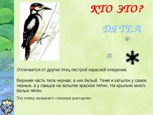 ДЯТЕЛ Отличается от других птиц пестрой окраской оперения. Верхняя часть тела