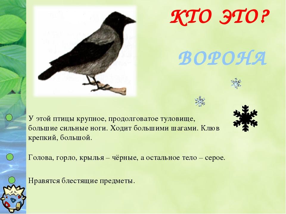 ВОРОНА КТО ЭТО? У этой птицы крупное, продолговатое туловище, большие сильные...
