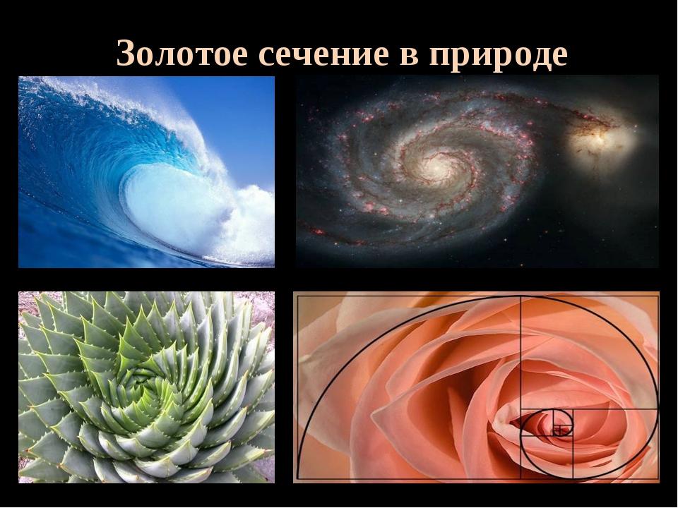 Математика в природе с картинками