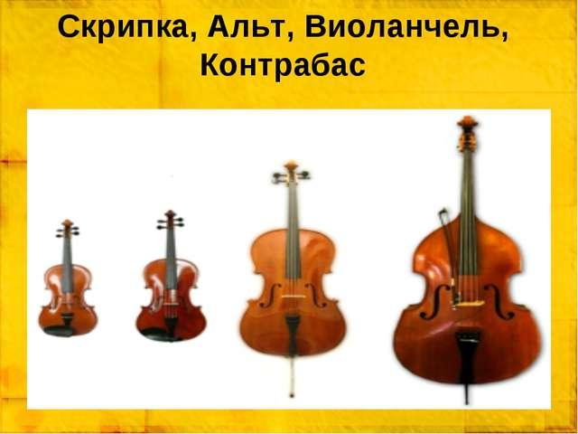 Скрипка, Альт, Виоланчель, Контрабас