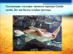 Постоянными «гостьями» являются черепахи Caretta-caretta. Вот чем богаты голу