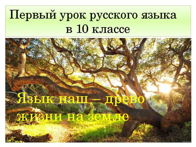 Язык наш – древо жизни на земле Первый урок русского языка в 10 классе