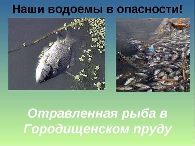 Наши водоемы в опасности! Отравленная рыба в Городищенском пруду