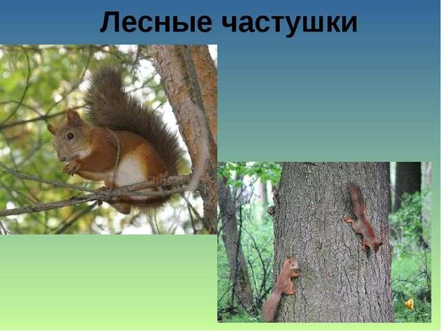 Лесные частушки