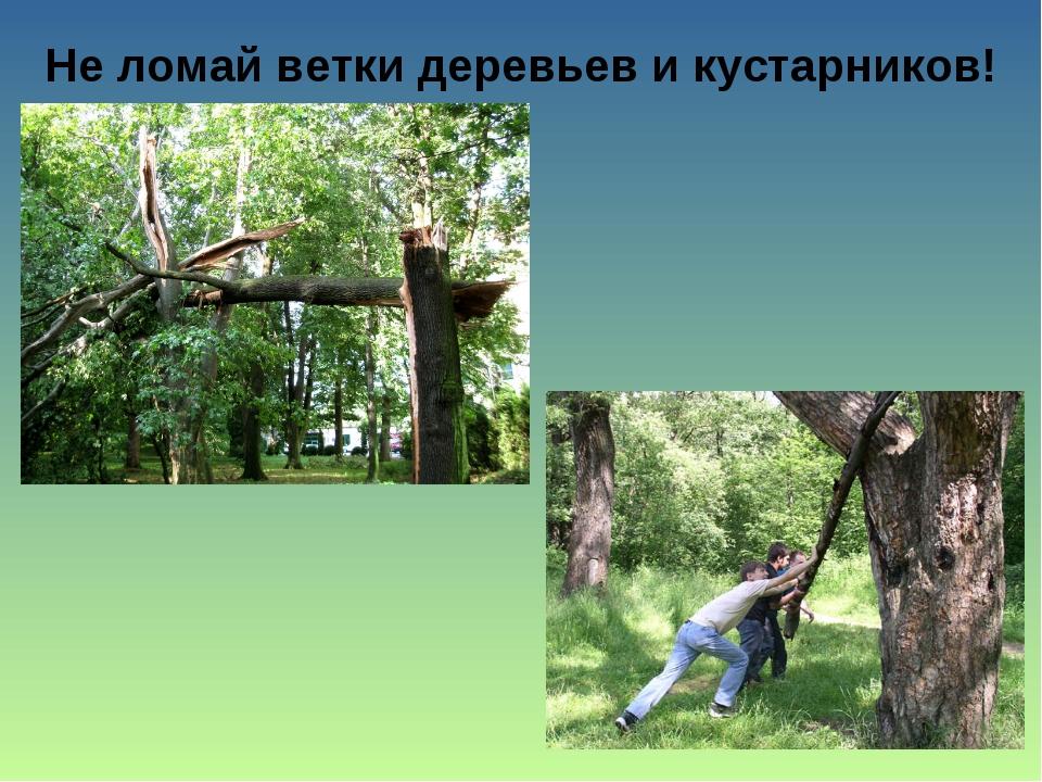Не ломай ветки деревьев и кустарников!