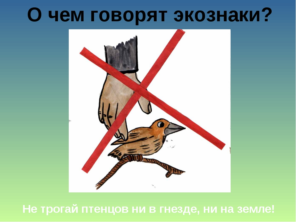 О чем говорят экознаки? Не трогай птенцов ни в гнезде, ни на земле!