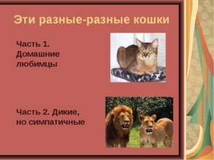 Эти разные-разные кошки Часть 1. Домашние любимцы Часть 2. Дикие, но симпа