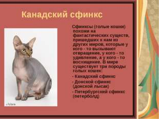 Канадский сфинкс Сфинксы (голые кошки) похожи на фантастических существ, при