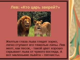 Лев: «Кто царь зверей?» Желтые глаза льва глядят зорко, легко ступают его т