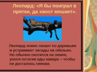 Леопард: «Я бы поиграл в прятки, да хвост мешает». Леопард ловко лазает по