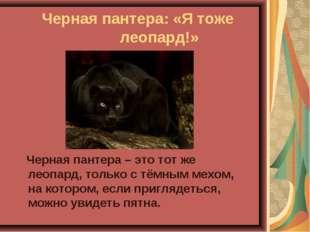 Черная пантера: «Я тоже  леопард!» Черная пантера – это тот же леопард, то