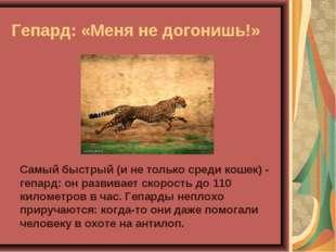 Гепард: «Меня не догонишь!» Самый быстрый (и не только среди кошек) - гепард: