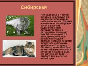 Сибирская Нет человека в России, который не слышал об отечественной пород