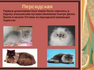 Персидская Первые длинношерстные кошки были завезены в Европу итальянским п