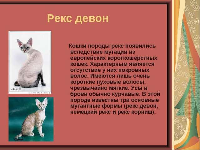 Рекс девон Кошки породы рекс появились вследствие мутации из европейских ко...