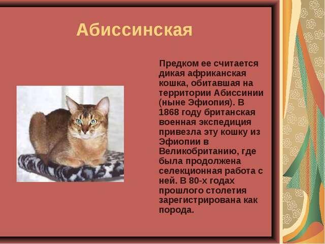 Абиссинская Предком ее считается дикая африканская кошка, обитавшая на терр...
