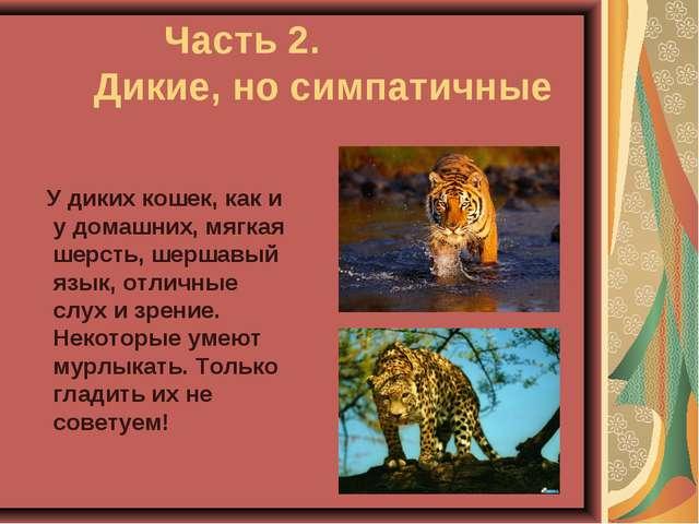 Часть 2. Дикие, но симпатичные У диких кошек, как и у домашних, мягкая шер...