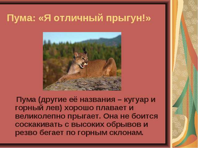 Пума: «Я отличный прыгун!» Пума (другие её названия – кугуар и горный лев) хо...