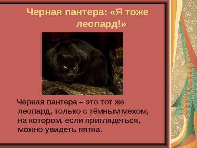 Черная пантера: «Я тоже  леопард!» Черная пантера – это тот же леопард, то...