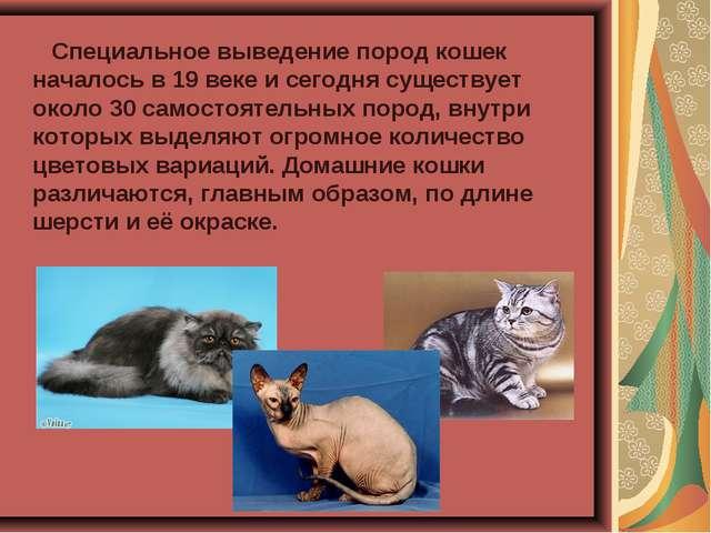 Специальное выведение пород кошек началось в 19 веке и сегодня существует ок...