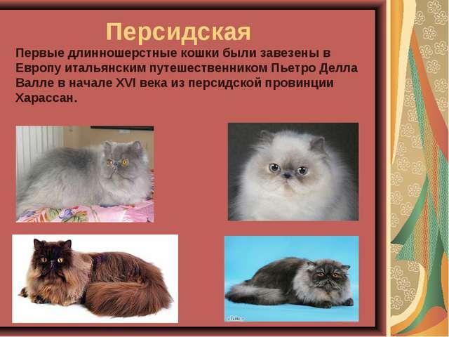 Персидская Первые длинношерстные кошки были завезены в Европу итальянским п...