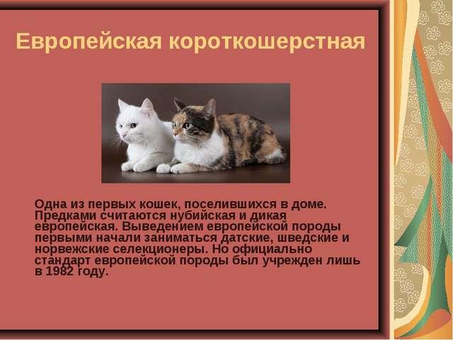 Европейская короткошерстная Одна из первых кошек, поселившихся в доме. Предк...