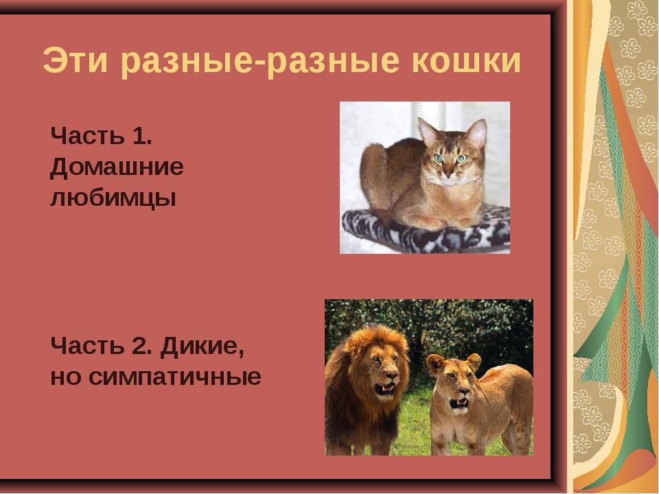Эти разные-разные кошки Часть 1. Домашние любимцы Часть 2. Дикие, но симпа...