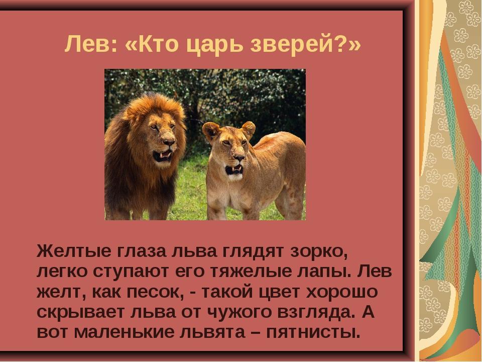 Лев: «Кто царь зверей?» Желтые глаза льва глядят зорко, легко ступают его т...