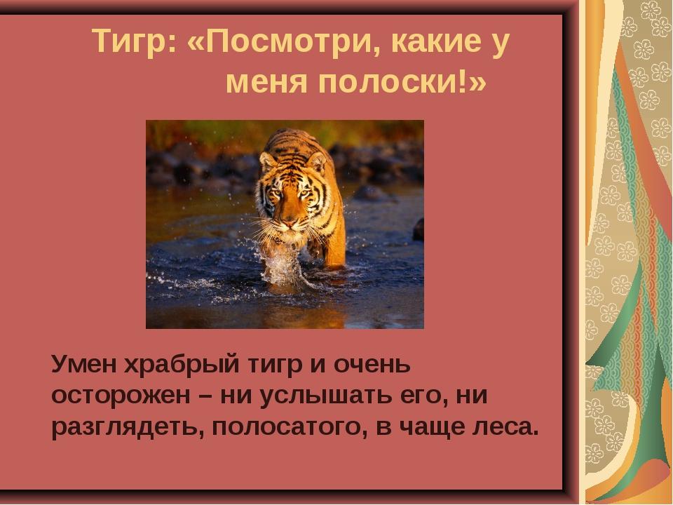 Тигр: «Посмотри, какие у меня полоски!» Умен храбрый тигр и очень осторо...