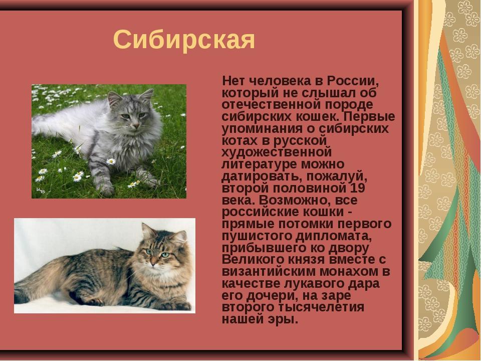 Сибирская Нет человека в России, который не слышал об отечественной пород...