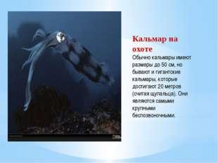Кальмар на охоте Обычно кальмары имеют размеры до 50 см, но бывают и гигантск