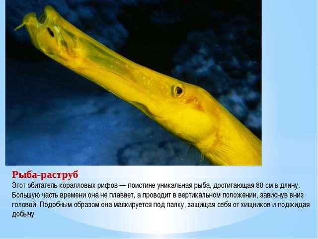 Рыба-раструб Этот обитатель коралловых рифов — поистине уникальная рыба, дост...