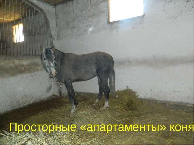 Просторные «апартаменты» коня