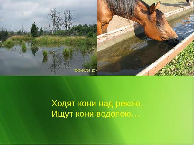 Ходят кони над рекою, Ищут кони водопою…