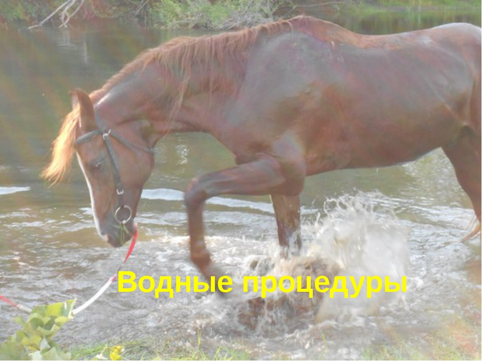 Водные процедуры