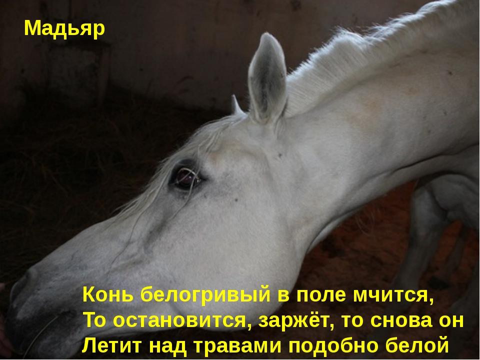 Конь белогривый в поле мчится, То остановится, заржёт, то снова он Летит над...
